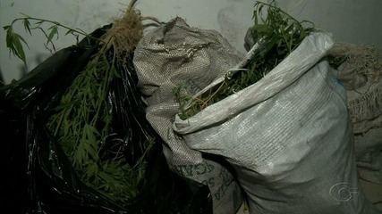 Suspeitos são presos por plantar maconha em terreno de igreja em Maceió