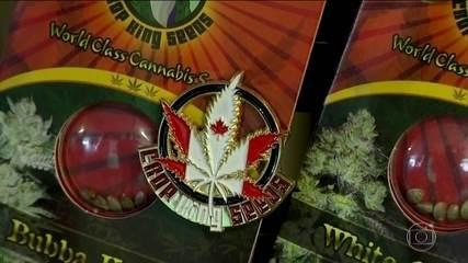 Canadá legaliza consumo recreativo da maconha