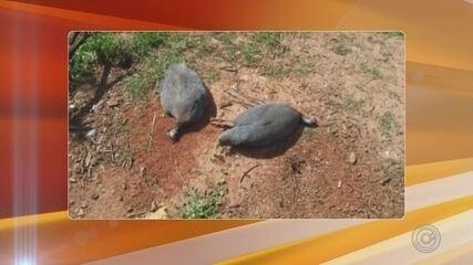 Morador é multado em R$ 282 mil por maltratar animais em Marapoama
