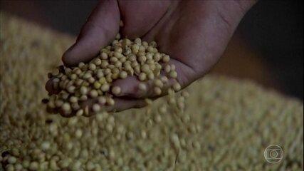 A soja brasileira se beneficia da disputa comercial entre China e EUA