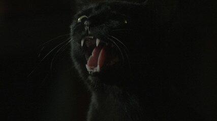 Resumo do dia - 30/01 – Luz se assusta com reação de León