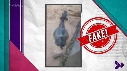 Ana Maria mostra vídeos falsos distribuídos nas redes sociais