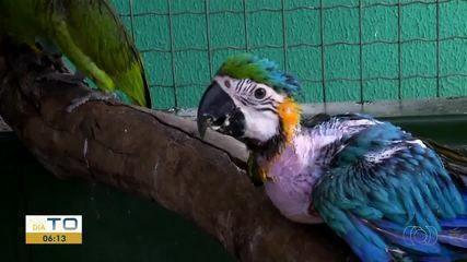 Animais silvestres vítimas do tráfico recebem tratamento especial no Centro de Fauna