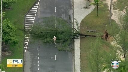 Globocop mostra queda de árvore na Barra da Tijuca