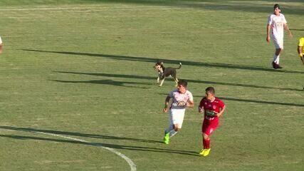 Cachorro animou a galera nas arquibancadas do Uberabão