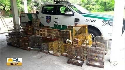Polícia Ambiental apreende cerca de 183 animais silvestres no útimo domingo, em Alagoas