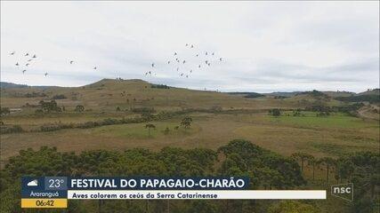 Festivais do papagaio-charão e do papagaio-de-peito-roxo começam na Serra catarinense