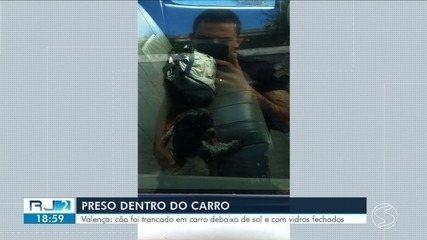 Guarda quebra vidro da janela para salvar cão trancado dentro de carro em Valença