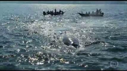 Técnicos do Ibama e do Gremar trabalham para levar filhote de jubarte para mar aberto