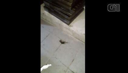 Imagens mostram infestação de ratos em empresa fornecedora de alimentos no Rio