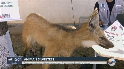 Governo de MG faz campanha para devolução de animais silvestres à natureza