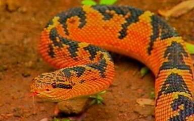 O Brasil é o bicho: serpentes do Brasil
