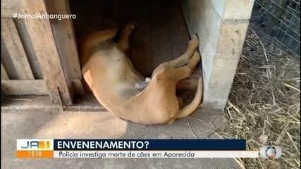 Dono de canil suspeita que cães foram envenenados, em Aparecida de Goiânia