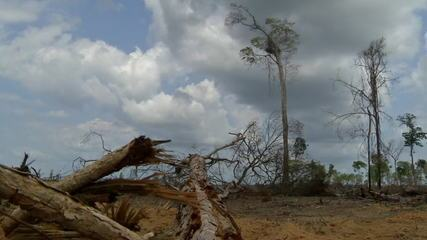 Governadores dizem que vão negociar com países doadores do Fundo Amazônia