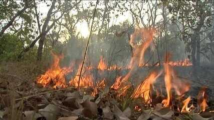 Ministério da Defesa monta centro de operações para combater queimadas