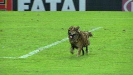 Cachorro invade o gramado na partida do CSA e Cruzeiro. Gandula tenta pegar, mas cai