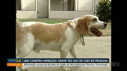UEM cometeu infração 'grave' no uso de cães em pesquisa, diz órgão do governo