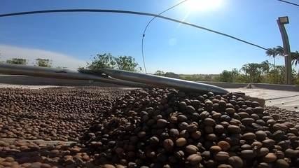 Produtores de café de Garça querem registro de identificação geográfica