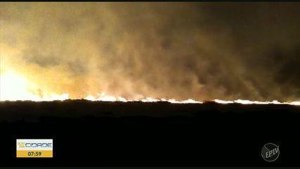 Incêndio atinge pasto no Instituto de Zootecnia de Nova Odessa