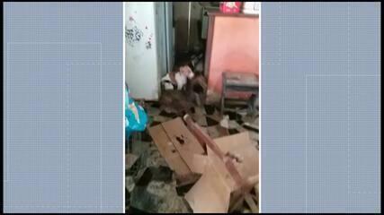 Cães eram criados em local insalubre na casa da família em Guarapari, ES