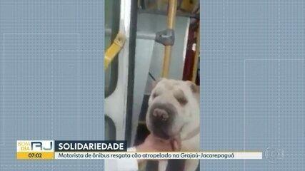 Motorista de ônibus resgata cão atropelado na Grajaú-Jacarepaguá