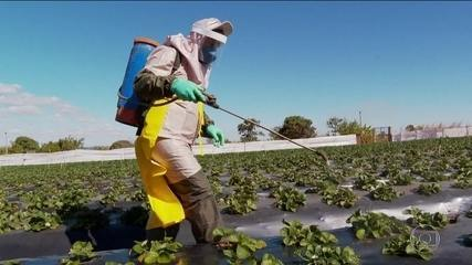 Aumenta número de lavouras com uso de agrotóxicos