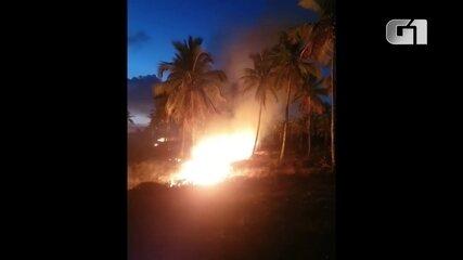 Incêndio atinge coqueiral de Maracaípe, no Litoral Sul de Pernambuco