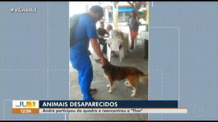 Quadro 'Animais Desaparecidos' faz reencontro do cão Thor com o dono