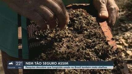 Pesquisadores da USP de São Carlos descobrem agrotóxico que também é letal para abelhas