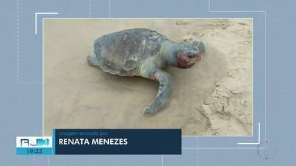 Tartaruga morta é encontrada em praia de Rio das Ostras
