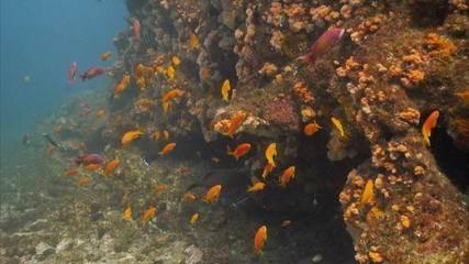 Aquecimento global está reduzindo oxigênio dos oceanos, diz pesquisa