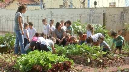 Moradores transformam terrenos baldios em hortas comunitárias em Birigui