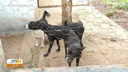 Abandono de animais se torna comum no período do fim de ano