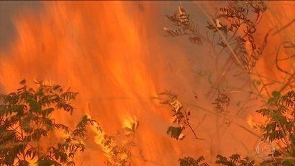 Focos de queimadas na Amazônia aumentam em 2019, informa o Inpe