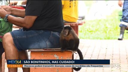 Macacos podem transmitir doenças
