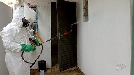 Ministério da Saúde testa novo veneno contra mosquito da dengue em Araçatuba
