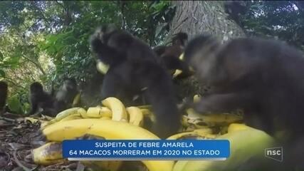 Casos de febre amarela causam alerta em Santa Catarina