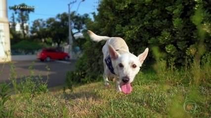 Final feliz para Tintim: casal adota cachorrinho com deficiência abandonado duas vezes
