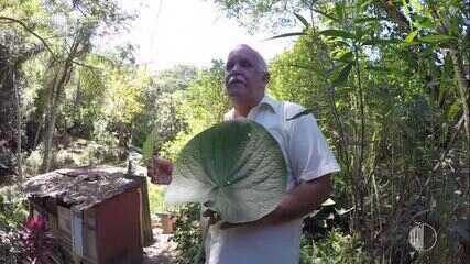 Plantas medicinais de Salesópolis