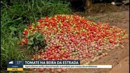 Agricultores estão descartando tomates na beira da estrada