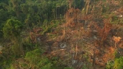 Aumenta o desmatamento em terras indígenas, diz estudo