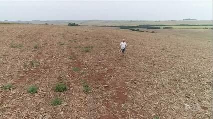 Seca atinge em cheio o RS e produtores pedem ajuda do governo