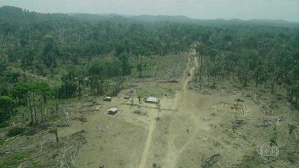 Fantástico: Terra indígena na Amazônia tem 94% de área declarada por fazendeiros, aponta Greenpeace