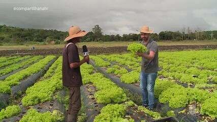 Reveja a experiência do Filipe Almeida em uma plantação de alface