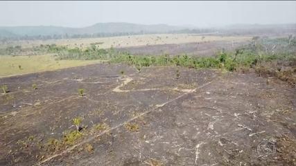 Amazônia tem maior desmatamento dos últimos dez anos para o mês abril, diz Imazon
