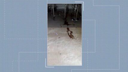 Funcionários reclamam de condições do necrotério do PS: sangue no chão e fila de caixões