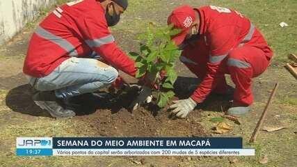 Prefeitura de Macapá iniciou arborização com mais de 200 mudas de 5 espécies