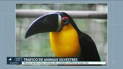 Animais silvestres são encontrados facilmente nas feiras livres do Rio