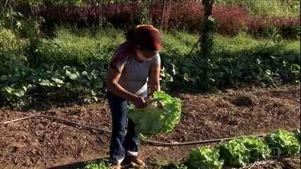 Los proyectos sociales llevan productos de pequeños agricultores a familias de bajos ingresos del país
