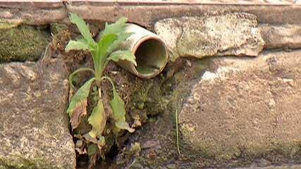 Moradores da Vila Mathias, em Mogi, reclamam de falta de saneamento